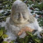 Little Buddha Sagasfeld