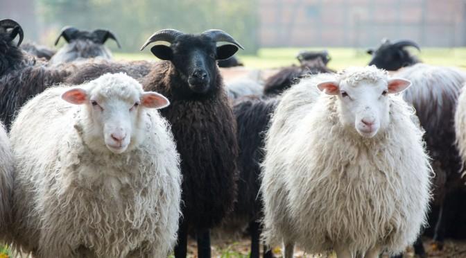 Ausflugsziele in der Lüneburger Heide & Heidefarmen Gewinnspiel